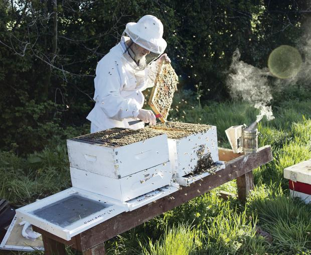 New life: beekeepers like Michael Young are reaping the benefits of the return of the sun