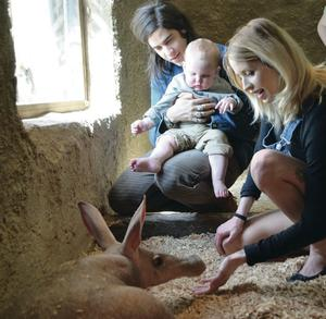 True love: Peaches with husband Thomas and son Astala meeting an aardvark at London Zoo