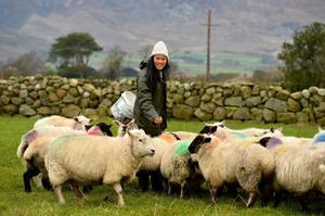 Slower pace of life: New York fashion designer Yuri Lee Keown at her husband's farm in Kilkeel