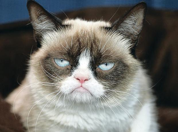 Feline fine: Grumpy Cat is an internet sensation