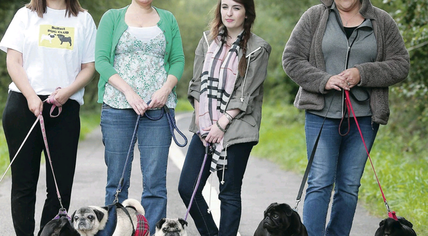 Doggone it: from left, Cintia Garland, Jackie Robinson, Betty Robinson and Julie Neill with their prized pugs