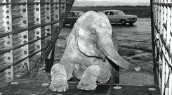 Short and Harland borrowed a baby elephant to demonstrate the freight capabilities of one of its new cargo planes