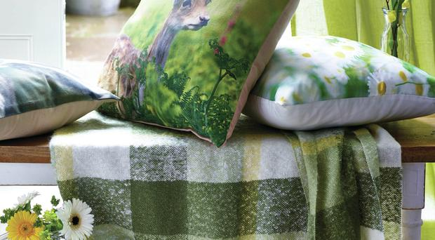 Daisy cushion, digital deer print cushion, green check throw - George Home