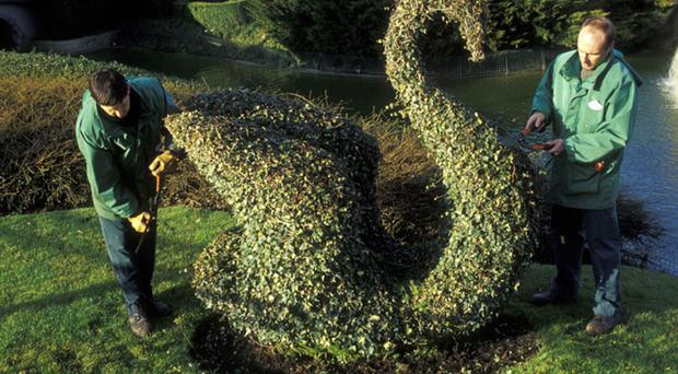 A topiary creation at Disneyland Paris