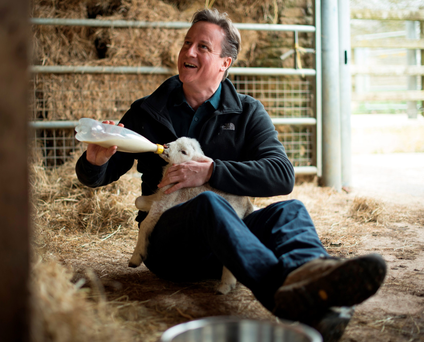 Animal attraction: David Cameron's appeal knows no bounds