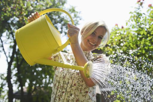 Gardeners are advised to take a common sense approach to watering
