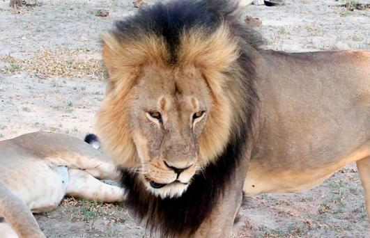 Savage killing: The death of Cecil outraged the world
