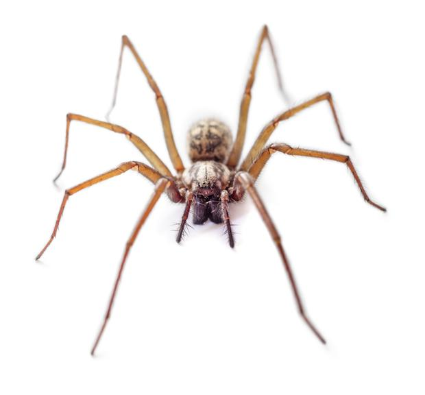 Creepy crawly: many people fear spiders