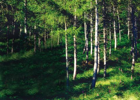 Year-round Colour: An evergreen coniferous forest