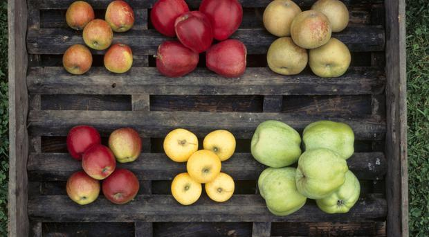 Fabulous Fruit: There are a wide variety of apple trees available, which boast many different types of fruit