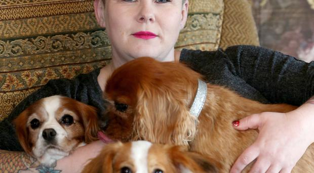 Top dog: Julie Blair with some of her nine Cavalier spaniels at home in north Belfast