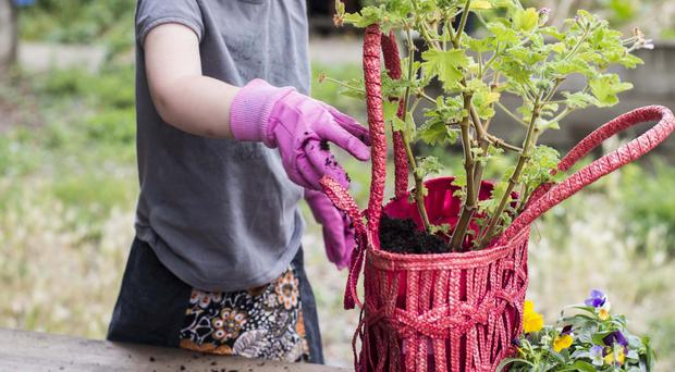 Watch them grow: Children can learn so much by being inventive in the garden or with plants indoors