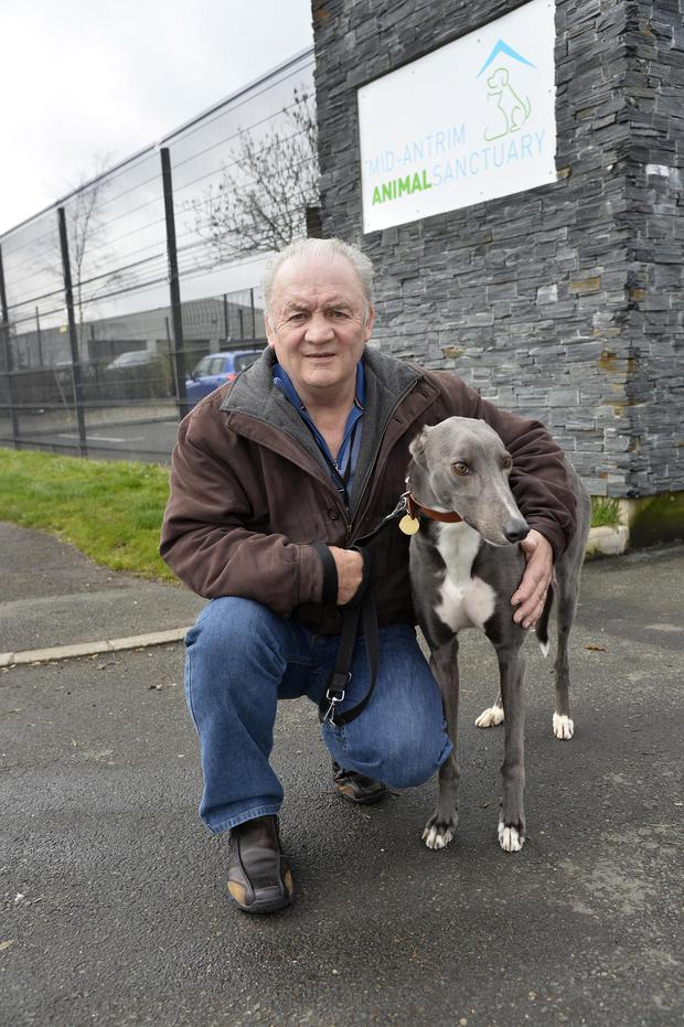 Canine care: shelter chairman George Anderson with his pet greyhound Norman who was found with his ears cruelly cut off