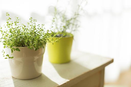 Healthy move: indoor potted plants