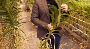 Neill Strain of Floral Couture preparing his orchids