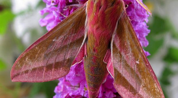 Much maligned: moths bring joy to the soul, says the book author