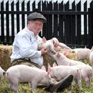 The Ulster Folk and Transport Museum's farm manager, Robert Berry, gathers together a number of the museum's cute six-week-old piglets ahead of the attraction's Native and Traditional Breeds Weekend extravaganza
