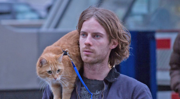 Perfect match: Luke Treadaway as James with his co-star Bob in A Street Cat Named Bob