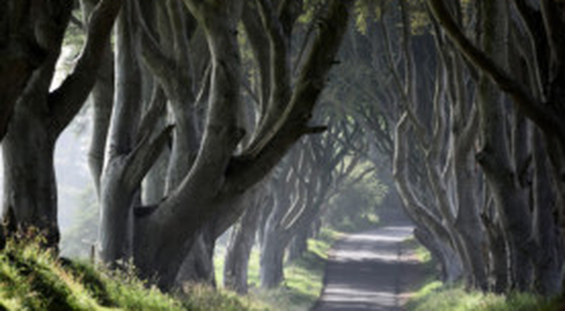 The prestigious Architectural Digest published in America listing the row of beech trees in its top 10 beautiful streets in the world.