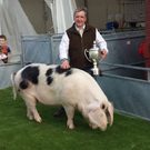 Cup winner: Brian Kelly after landing last year's traditional pig category