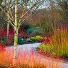 Growing places: Cornus alba