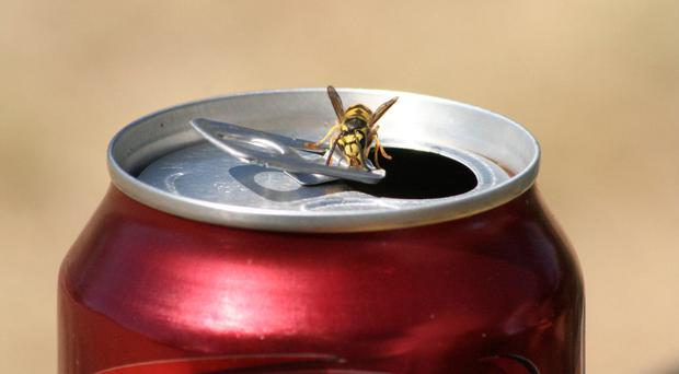 Drink aware: wasps are attracted to beverages as well, so be careful