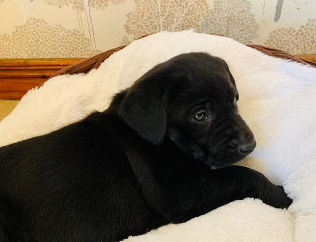 New arrival: Cujo who's helping to mend hearts in the O'Neill home