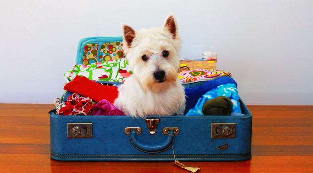 Pet needs: check you've packed everything your dog requires