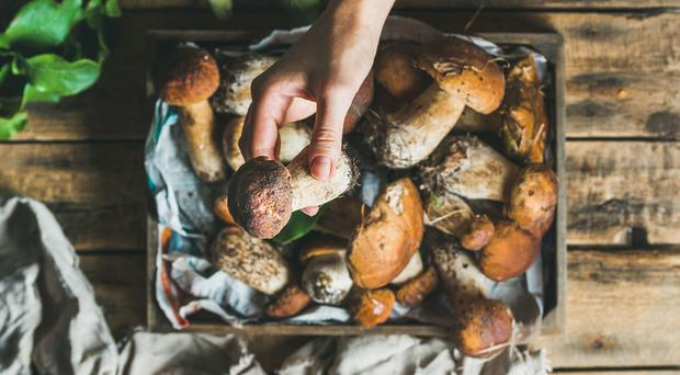 Natural goodness: mushrooms are popular with foragers