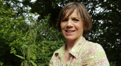 Garden treasures: Noreen Van der Velde's nettles growing at home in Co Antrim