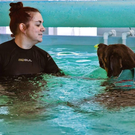 Making waves: Joanne Mulholland with Havoc in the pool