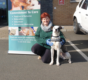 Janet Hume with Monty, a seven-month-old AM Bulldog, who will be available for rehoming when the animal sanctuary reopens