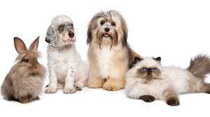 Furry friends: all types of animals will be at the Pet Expo in Titanic Exhibition Centre