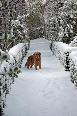 Monty Don's dog, Nigel, in winter.