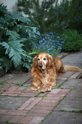 Monty Don's dog, Nigel