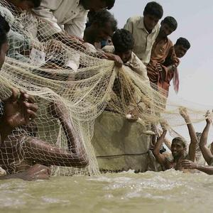 Pakistani flood victims catch fish along flooded roads in Shah Ghar village, Pakistan (AP)