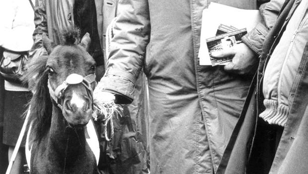 REVEREND IAN PAISLEY MP.Ian Paisley, out looking for votes for the European Elections, stops to look at this little Shetland Pony at the Ballyclare May Fair. 22/5/1984.