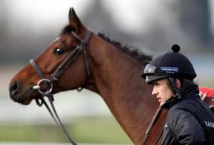 Ruby Walsh with Hurricane Fly on the gallops at Cheltenham Racecourse yesterday
