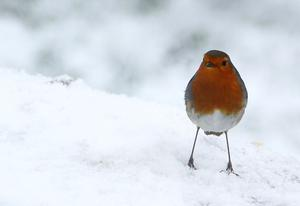 Winter visitor to my back garden. Almost fell down trying to get my camera. By Martin in Banbridge