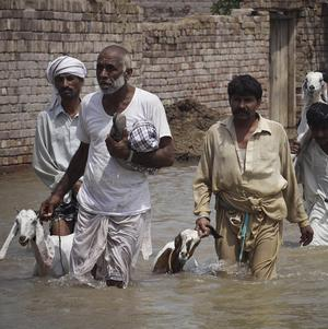 Pakistani flood affected villagers move to safer areas in Muzaffargarh (AP)