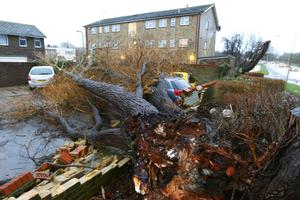A tree rests on three cars in Havant, Hampshire as fierce storms battered Britain today, with heavy rain and winds gusting up to 85mph