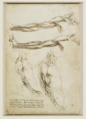 Collections finest drawings by the Renaissance master Leonardo Da Vinci will be shown at the Ulster Museum this summer