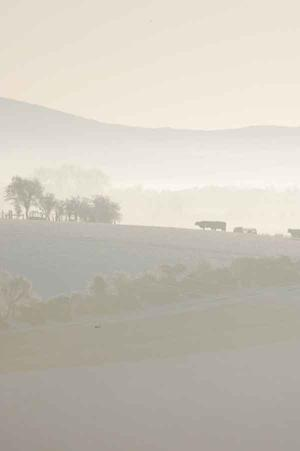 Mist rises over the hills of Dromara on Christmas morning. By Emma Bell, Dromore