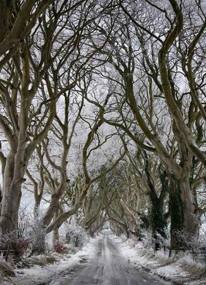 The Dark Hedges, Stranocum, Xmas Day 2009. By Stephen Thompson