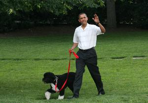 President Barack Obama walks the first dog Bo to a picnic for members of Congress