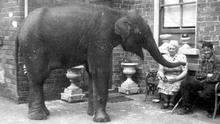 Baby elephant, Sheila, and her carers