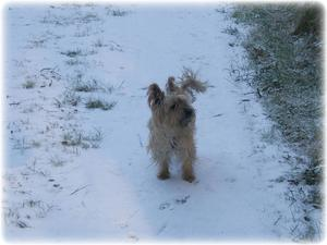 It's a dogs life... (snow joke !). By William McKnight