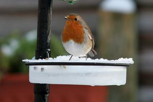 Feed our feathered friends. Submitted by Derek Laverty, Lisburn