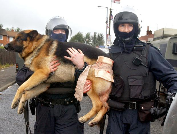 Police officers carry an injured dog away to get medical help after a blast bomb was launched by protesting loyalists