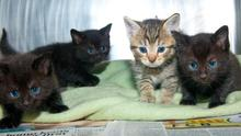 The four kittens which have been rescued by the Rainbow Rehoming Centre in Eglinton